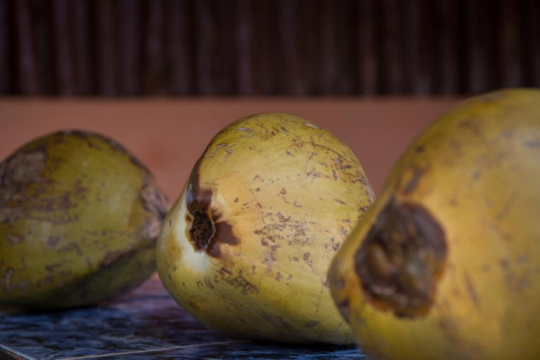 travel-rural-cuba-coconut
