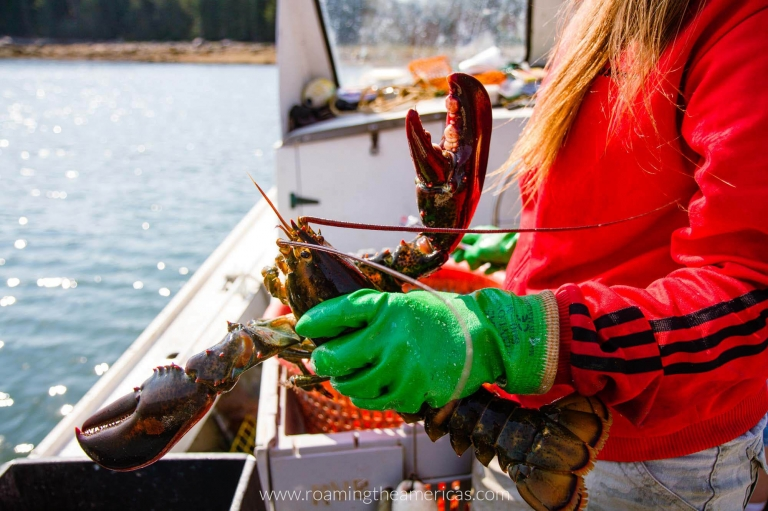 Girl holding a lobster on a lobster boat in Maine