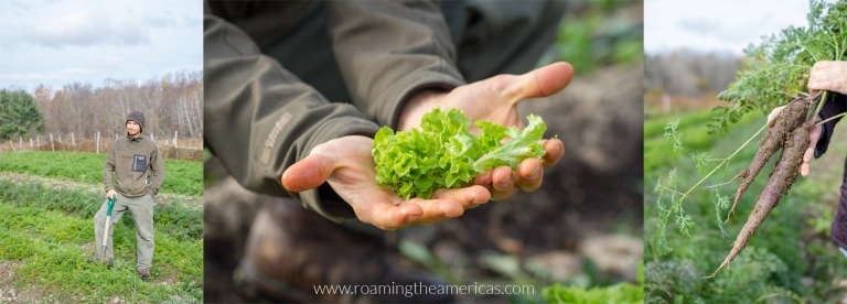 Harvesting lettuce and carrots at a farm in the Finger Lakes for a farm-to-table dinner at Pleasant Valley Inn