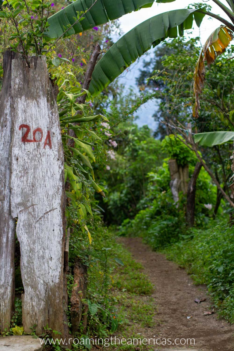 Fence, palm trees, and a path going into the woods in San Cristobal El Alto, Guatemala