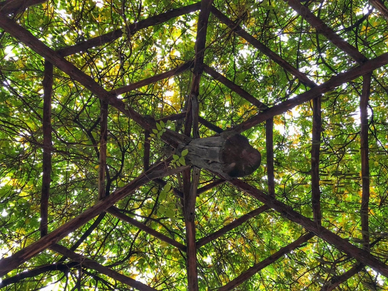 View of Cop Cot ceiling in Central Park from inside - wooden gazebo covered in greenery